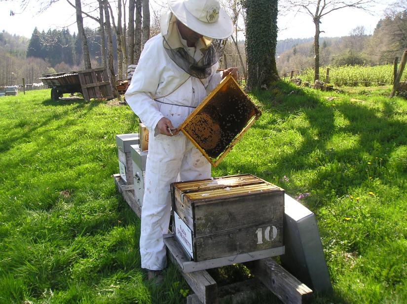 Crédits Un toit pour les abeilles